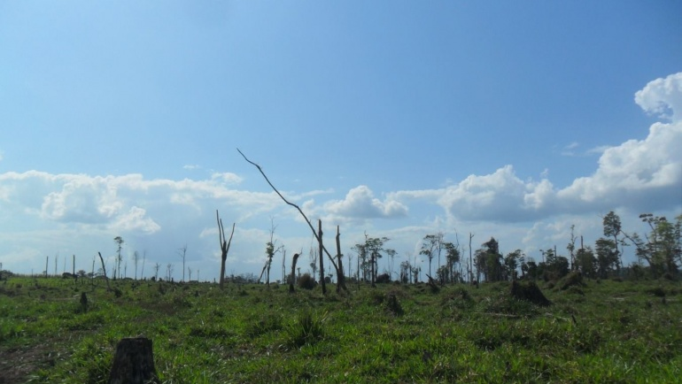 History Part 4: Deforestation is happening at an alarming rate!